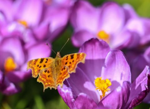This years first butterfly... by clochartist-photo
