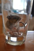 Mouse In A Cup by xxrawrsiclexx