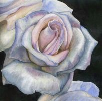 Rose for Montserrat by CathyStephens