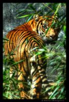 Sumatran Tiger by colpewole