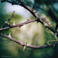 .: thorn :. by all17