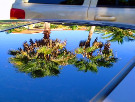 Palm trees in a sunroof by Raven-AI