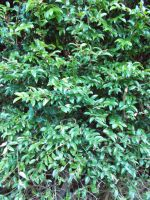 Natural Hedge, No Flash #2 by ohallford