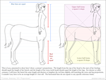 Centaur Anatomy 101: Proportions by phantom-inker