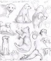 Calabrian Sheperd dog puppies study by FuriarossaAndMimma