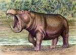 Hexaprotodon sivalensis by WillemSvdMerwe