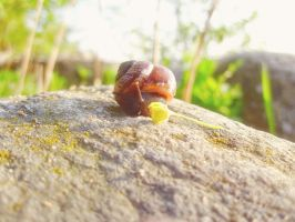 adventure snail by SwaEgo