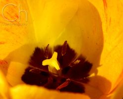 Spring 3 by Champineography