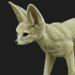 Fennec Fox by Mewitti