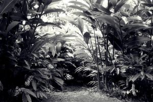 Paysage Tropical by w-shayler