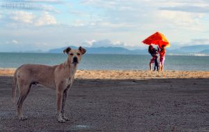 Its a Dog's Life by Piddling