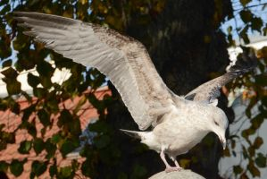 Seagull Landing - Stock by LuDa-Stock