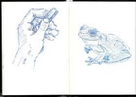 Sketchbook: a frog in the hand...? by Waldbraut