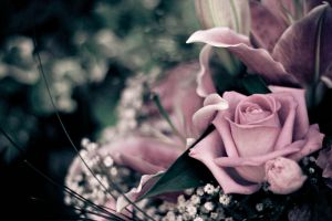 flowers 2 by Lady-Twiglet