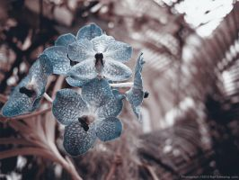 Orchid from Underneath by KBeezie