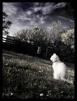 White cat by LovieLovetree