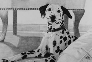 Dalmation by smccallart