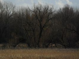 Lake Trail (winter) Marsh 5 by TornPageDyedRed