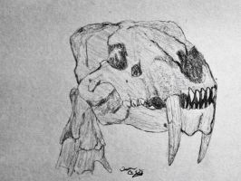 Prehistoric animals: smilodon skull by OG7