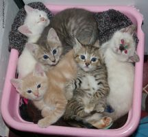 Basket kittens by StaySafeEatCheese