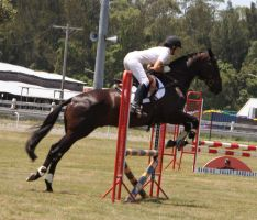 STOCK Showjumping 378 by aussiegal7