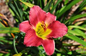 Pink and Yellow Flower by ladybug95