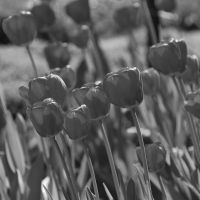 Black and white I by black-ladybird