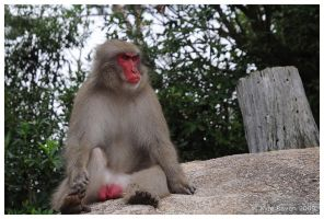 Mount Misen Monkey by escape-is-at-hand