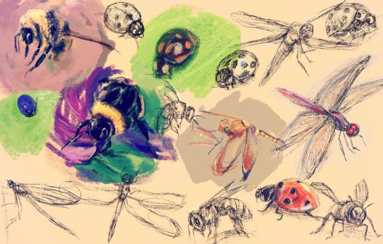 Insects by Meorow