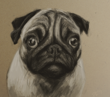 Pugly Ugly by Pagerda
