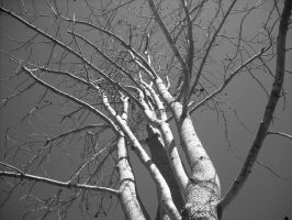 tree in winter by deep-south-mele