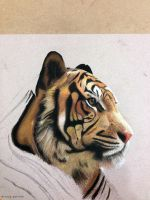 Tiger by abgraph by abgraph