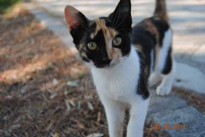 street cat 1 by o0Mirti0o