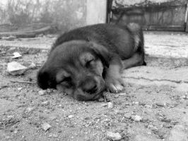 A dog is a dog. by Actionary