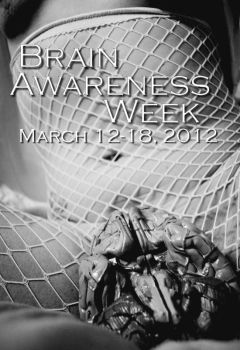 Brain Awareness by ComaBlue