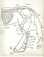 Skeletal Anatomy of Equus Faustus by TheAardvarkPeople
