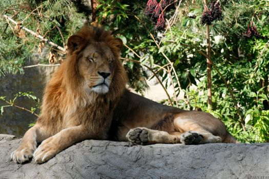King of the ZOO by LauvaTai