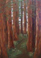 Redwoods by KCJoughDoitch