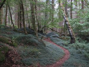 In the forest II by fairling-stock