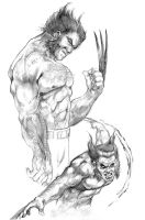 Wolverine Sketches By DW MIller by ConceptsByMiller