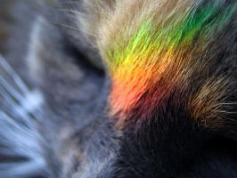 Patch Rainbow by therealarien