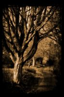 a lonesome tree by awjay