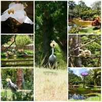 zoo collage by AllAboutDianne