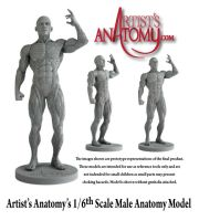 Artists Anatomy Model by ArtistsAnatomy