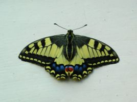 Stock: Butterfly 5 by Ireth-stock
