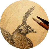 Peafowl Head Progress by Himmapaan
