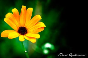 Flower.. by danniibooy