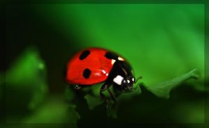 Lady Bug by Nataly1st