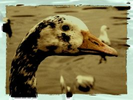 goose by awjay