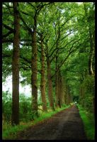 Going on a long green lane by jchanders